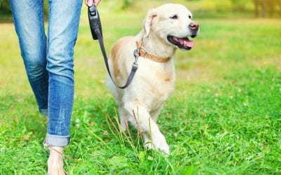 The Importance of Exercise for Your Dog
