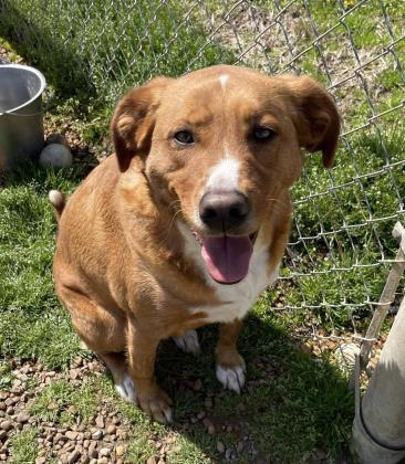 McCracken County Humane Society | Pet Adoption